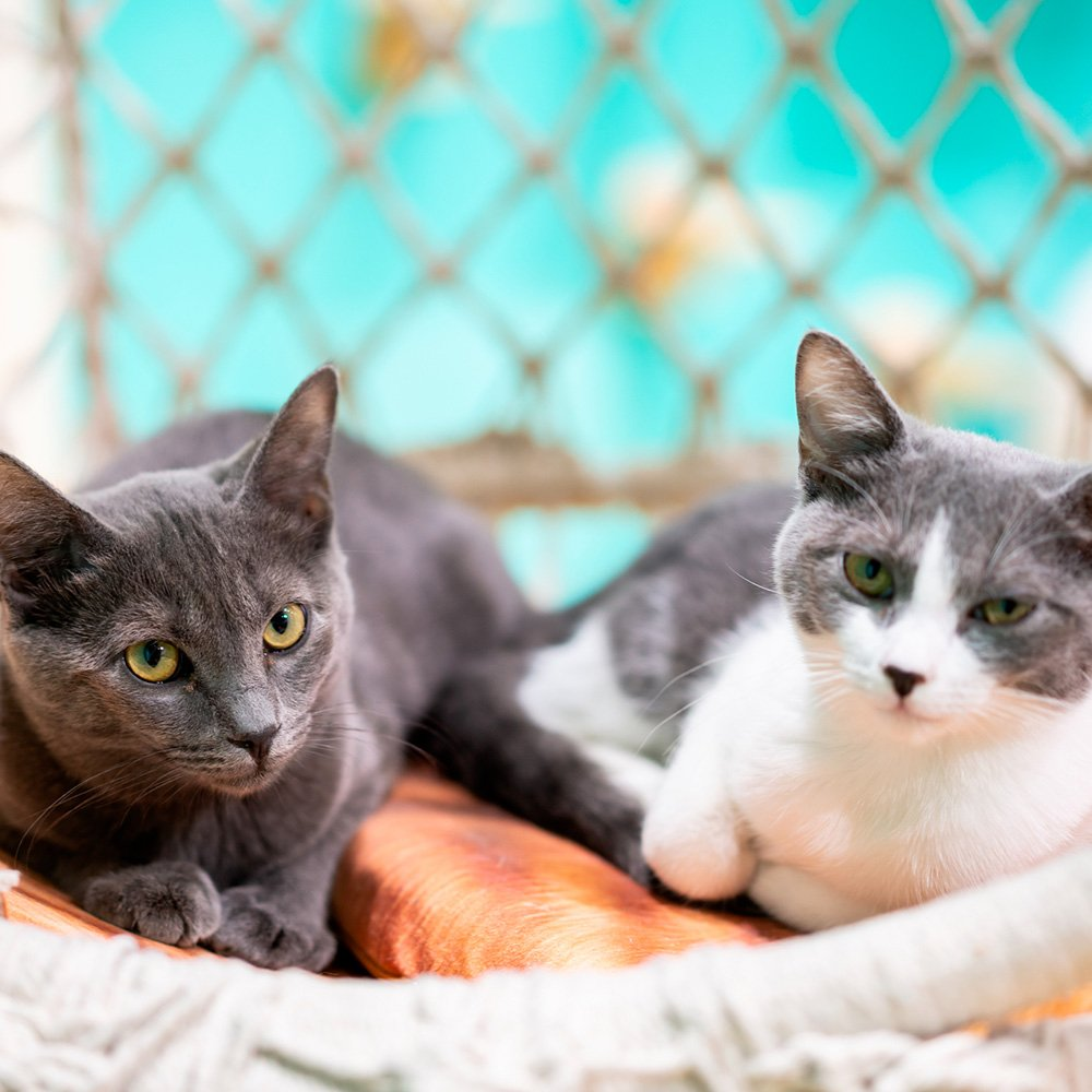 Accompagnement stratégique, financier et organisationnel du développement des activités de refuge, fourrière et pension de l'association Eden cat's