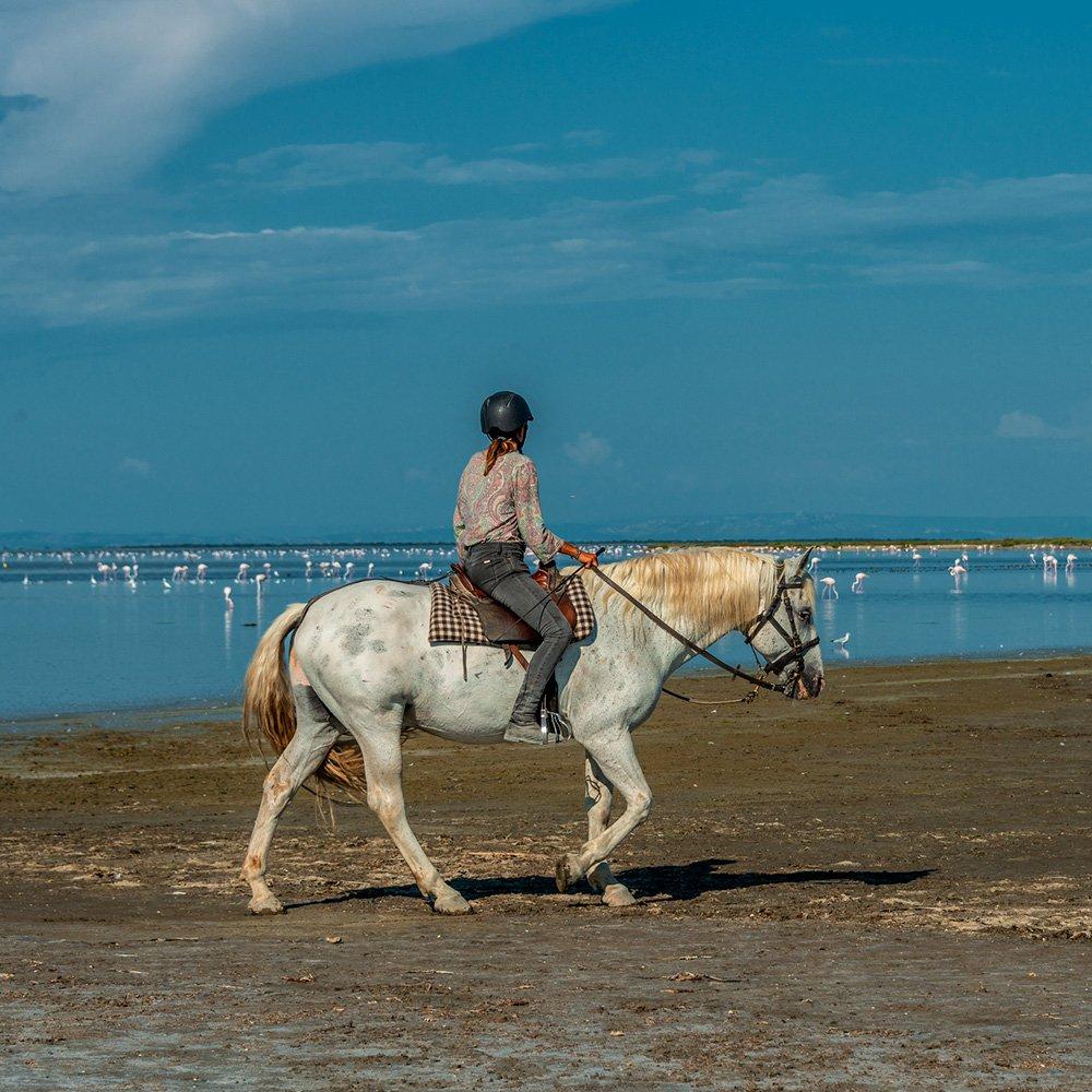 Création d'itinéraires Equestres En Camargue